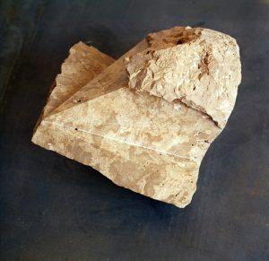 Cráneo de Hominídeo